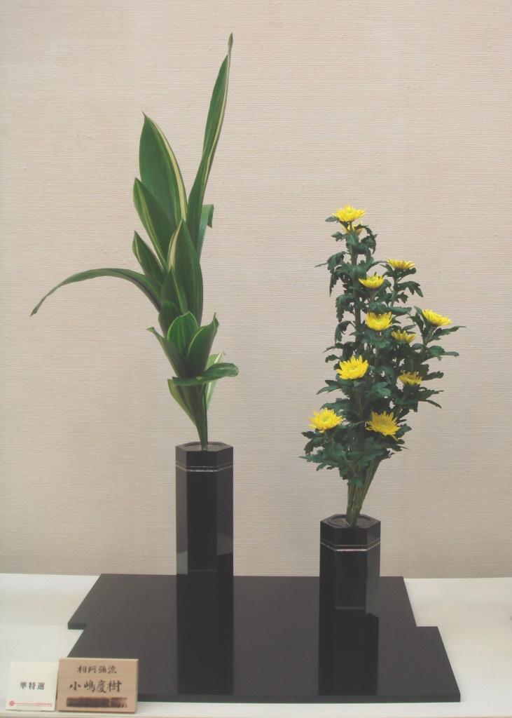 小嶋 慶樹 準特選 葉蘭、菊