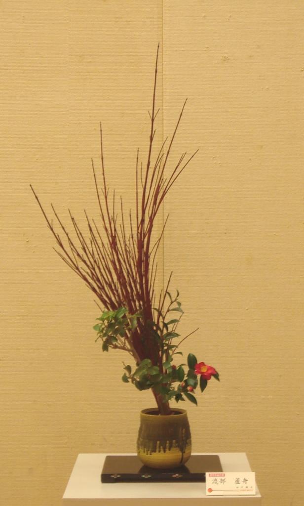 渡部 蘆舟 サンゴ水木(指定花材)、山茶花