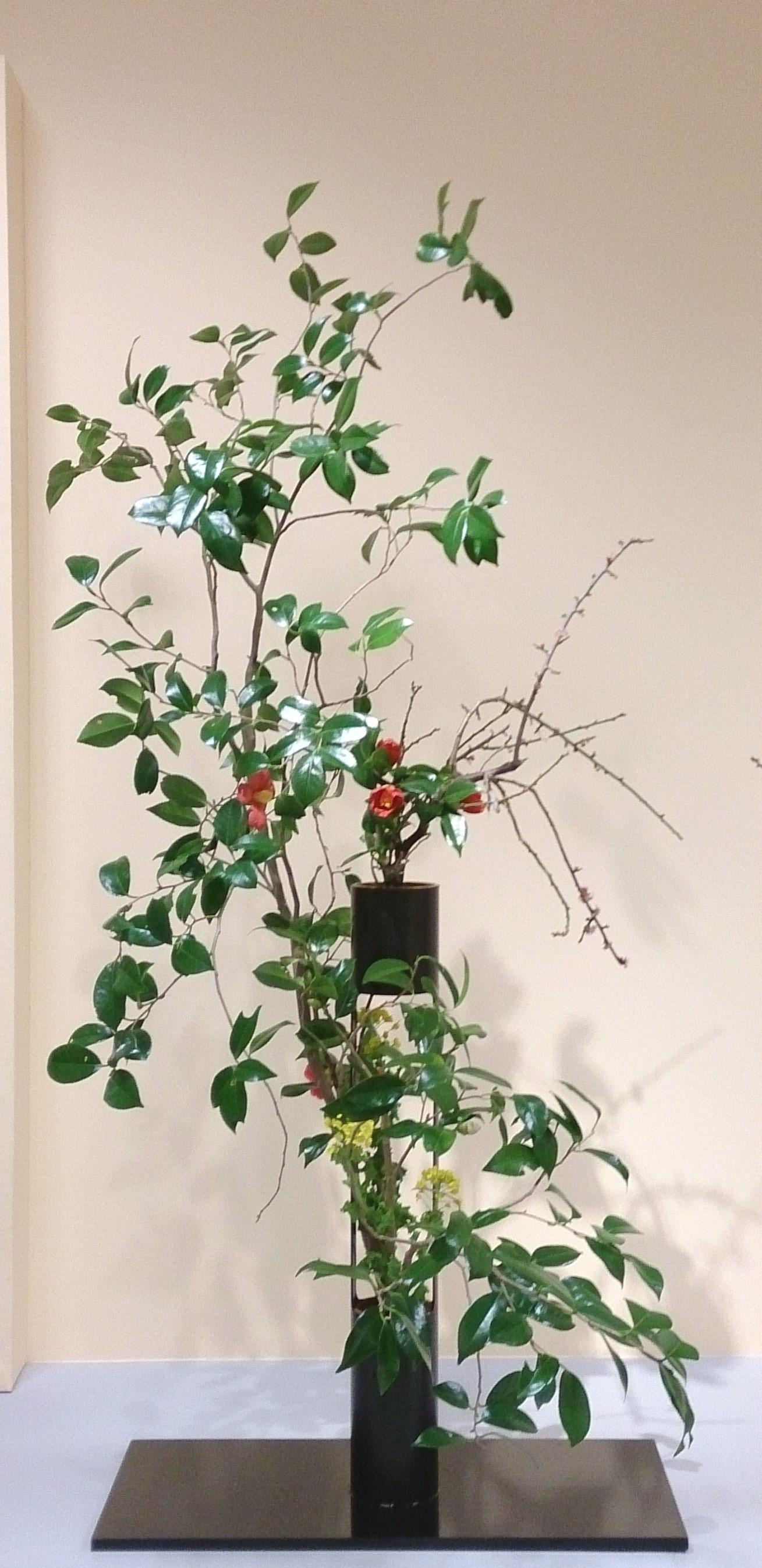 家元 横地 画抱 (椿、枝垂れ梅、菜の花)