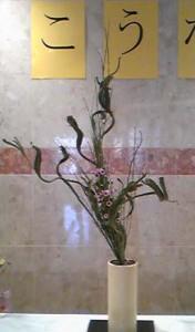 三輪 翠霞 (石化えにしだ、小菊)