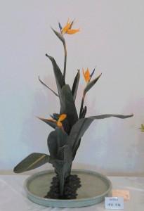 津村 洋楓