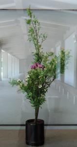 2016千鳥ヶ淵生花