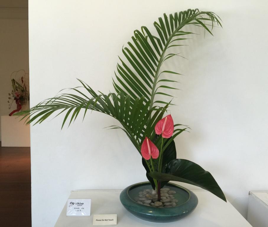 板井 爽花 (アレカヤシ、フィロデンドロ、アンセリウム)